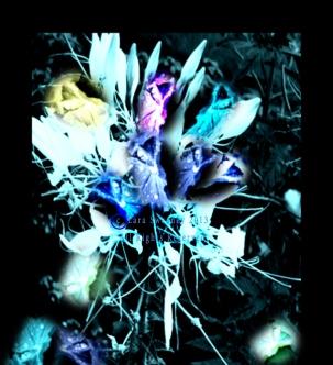 Botanic Garden Feat. Image